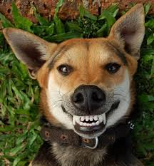 What Dog Food is Best For Healthy Teeth?