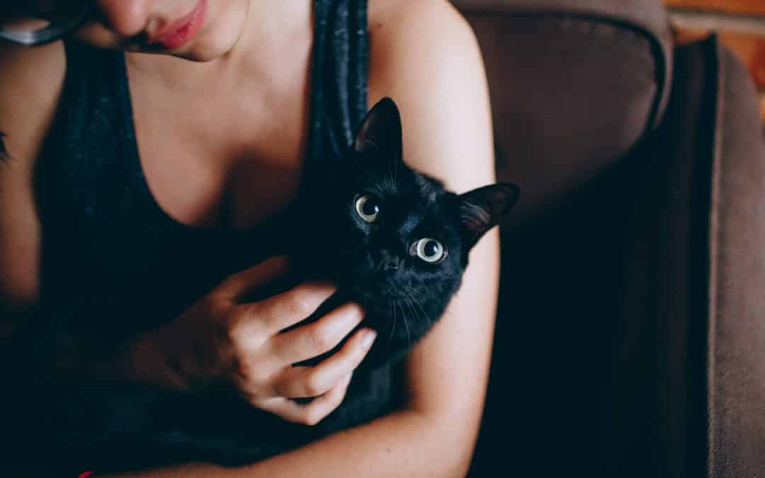 5 reasons why you should adopt a black cat